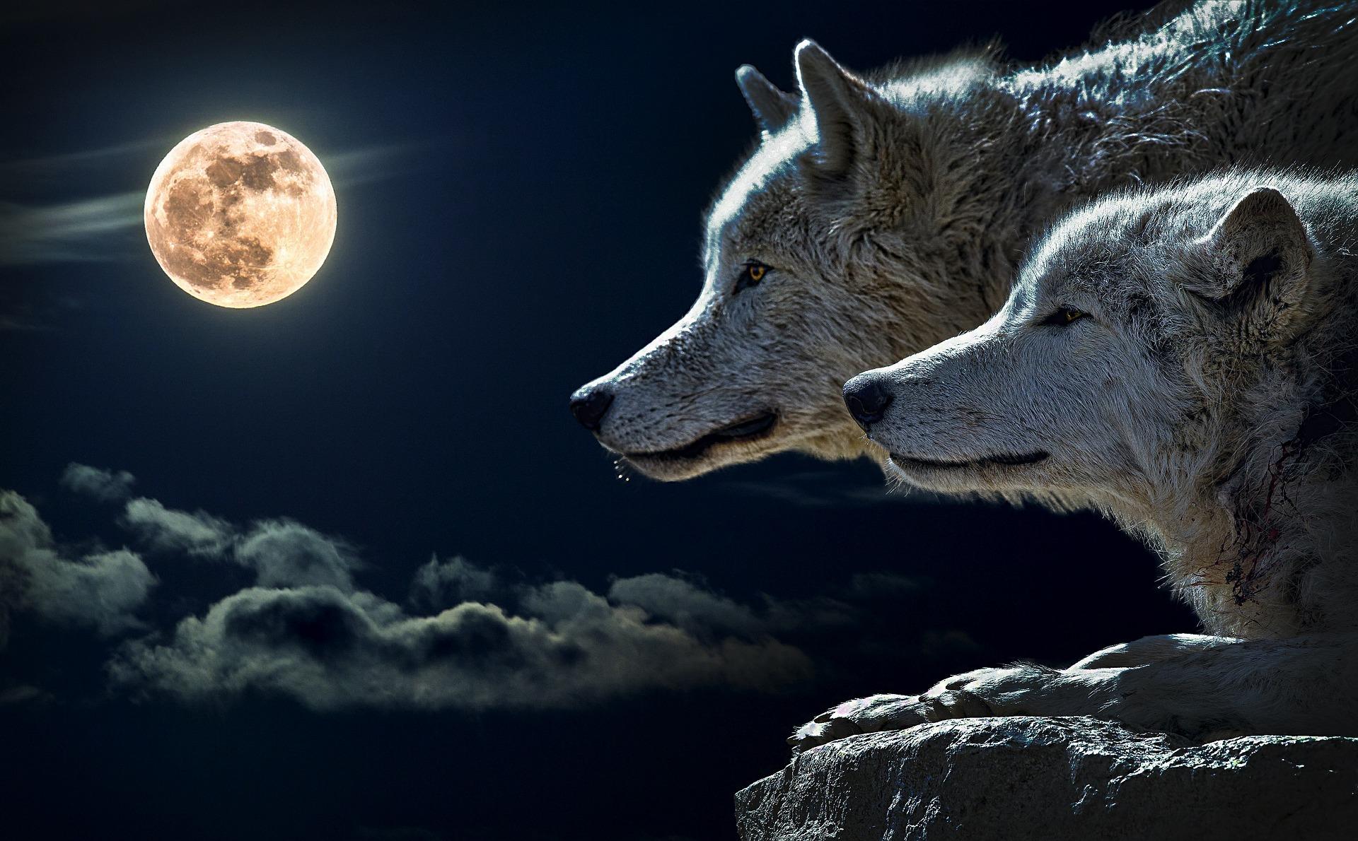 Zwei Wölfe leben in uns - Blog | Froschkoenige.ch - Jürg ...
